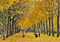 송파의 가을
